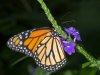 Niagara Butterfly Conservatory 2012